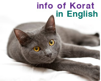 Info of Korat (English version)
