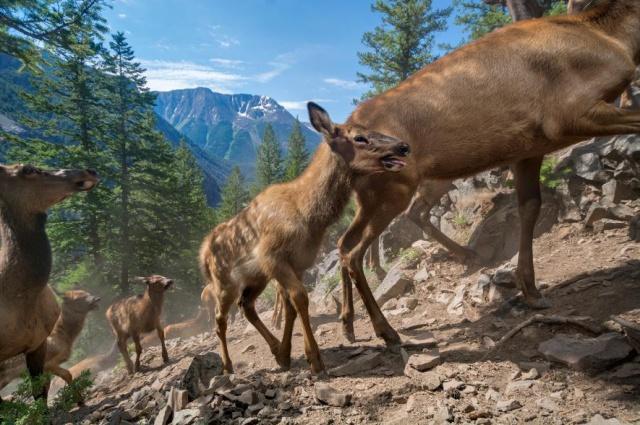 20 ภาพสัตว์ป่าของ National Geographic